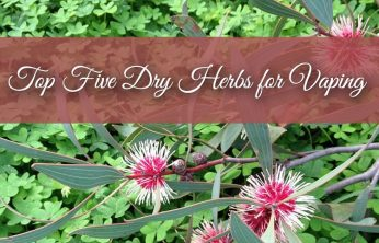 Top 5 Dry Herbs To Vape - Spinfuel VAPE Magazine