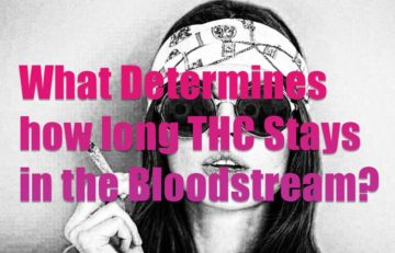 Marijuana -How long will THC Stays in Your Bloodstream?
