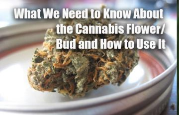 What We Need to Know About the Cannabis Flower/Bud and How to Use It