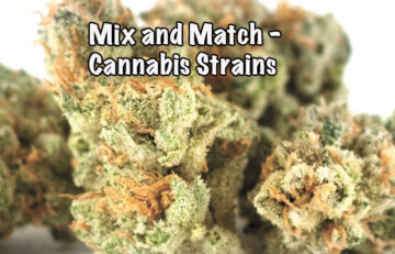 Mix and Match - What's the best way to mix strains?